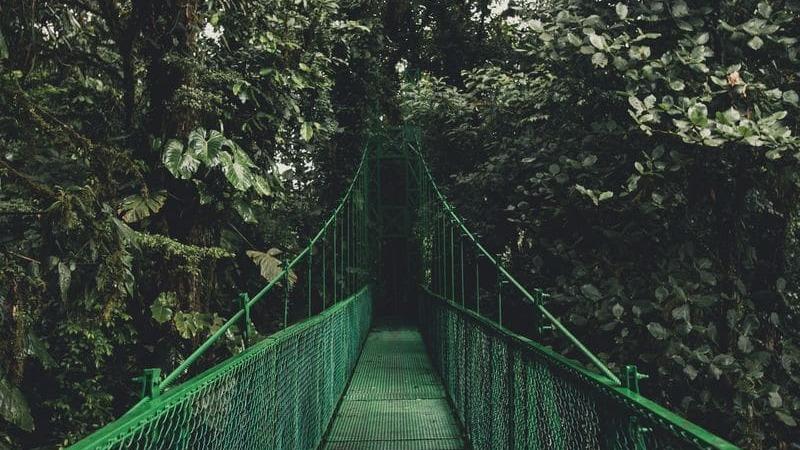 Monteverde es famoso por su biodiversidad.
