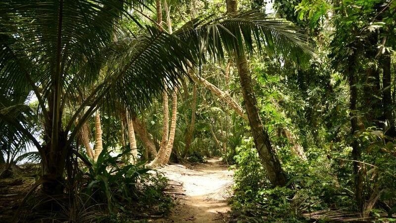 Tortuguero, es una región con una fauna increíble.