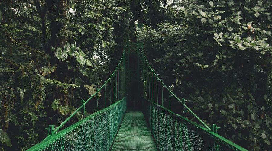 Monteverde es uno de los parques nacionales más visitados de Costa Rica.