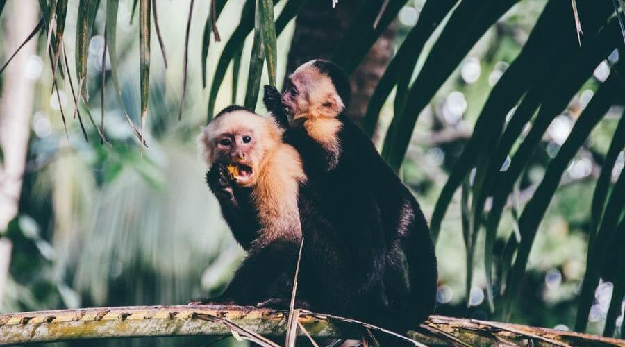 Para viajar a Costa Rica es necesario tener ciertas vacunas.