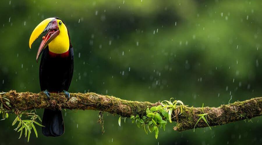 Noviembre es un mes lluvioso en Costa Rica