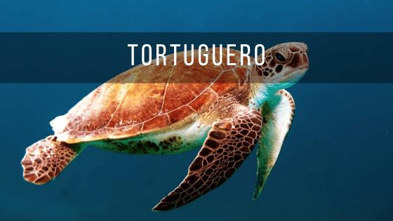 Tortuguero está en el Caribe de Costa rica y se pueden ver cientos de tortugas.
