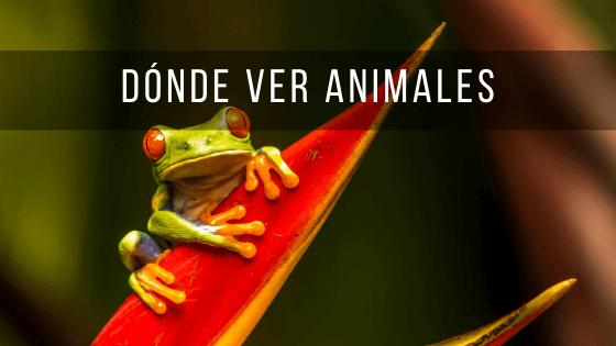 Costa Rica es un país con gran diversidad de fauna en el que se pueden ver muchos animales.