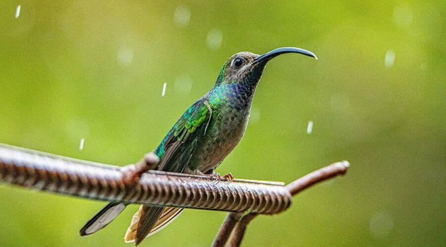 El tiempo en Costa Rica en agosto es más lluvioso que durante la estación seca