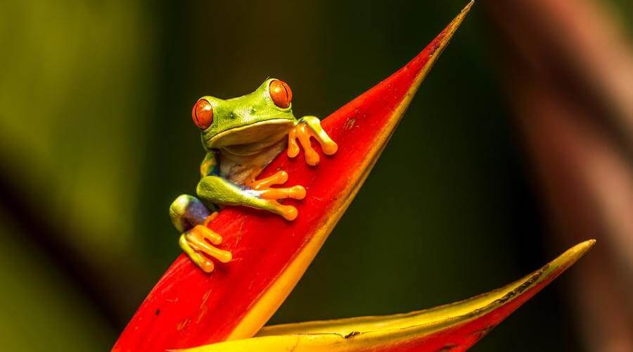 En Costa Rica hay muchos animales exóticos que puedes ver.