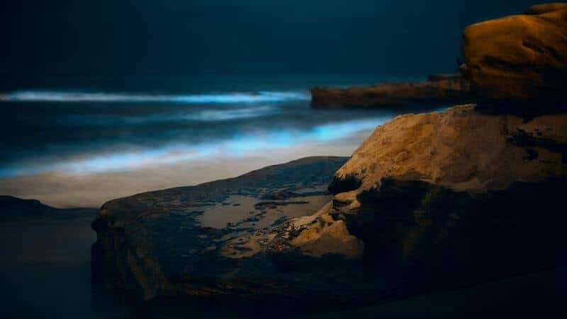 Bioluminiscencia en Costa Rica